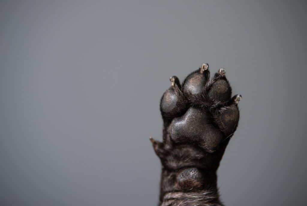 obcinanie psich pazurów